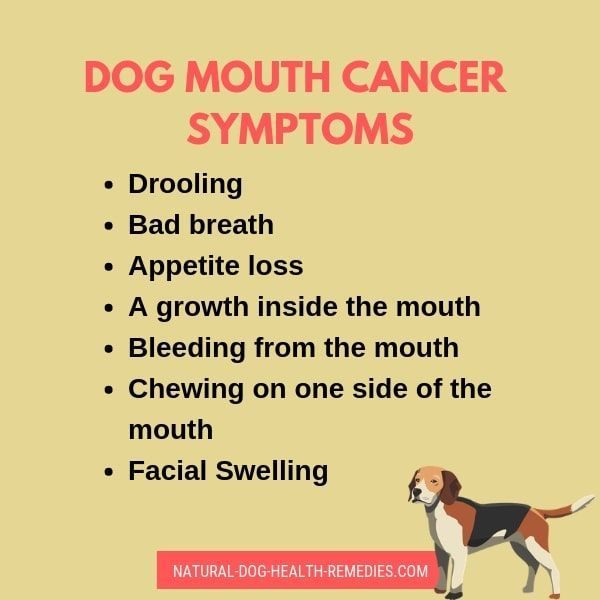 Picture Of Mouth Cancer In Dogs