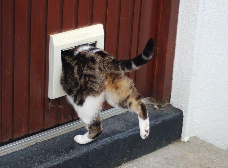 Dvířka pro psy a kočky: Zajistěte svým mazlíčkům svobodu
