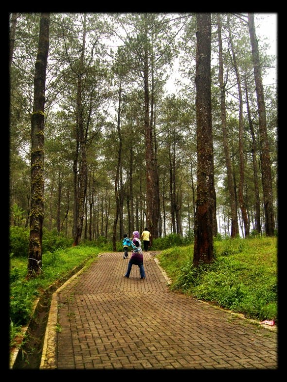 Bandung Tree Top Adventure
