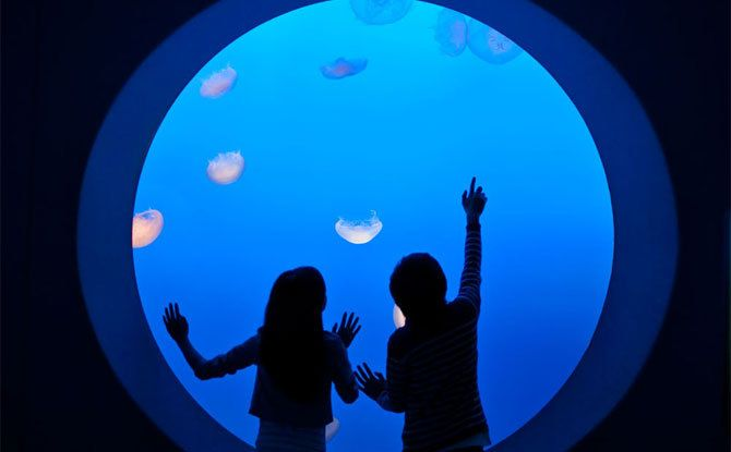 Monterey's Top Attractions - Official Tourism Information - Monterey Bay Aquarium, Cannery Row, Parks, Scenic Drives: California 2016, Aquarium Monterey, Activities For Kids, Monterey Bay Aquarium, Kid Friendly Activities, Monterey California, Bays, California Kids, Things To Do