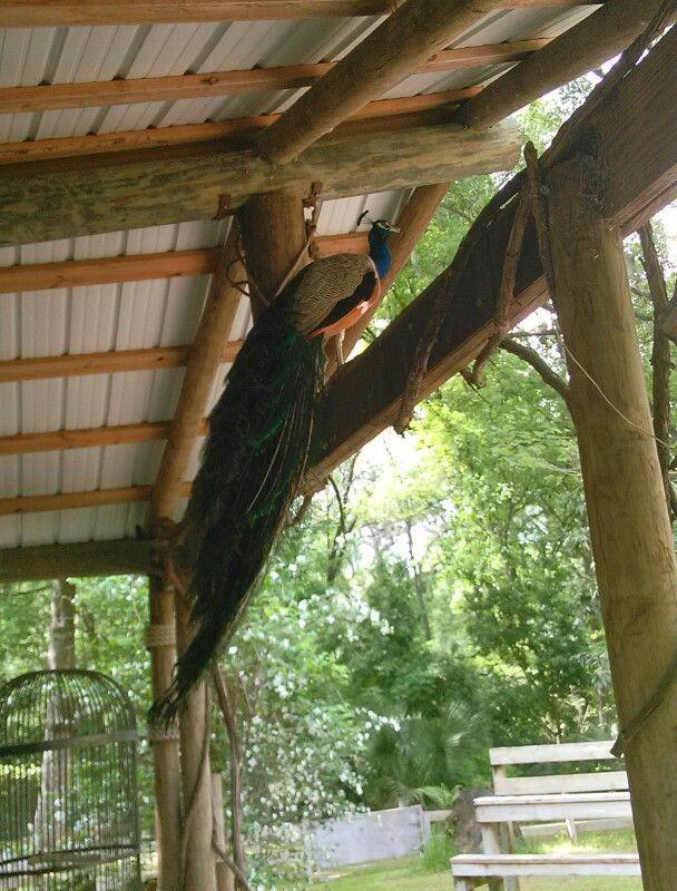 Camp Kulaqua zoo, Peak Home