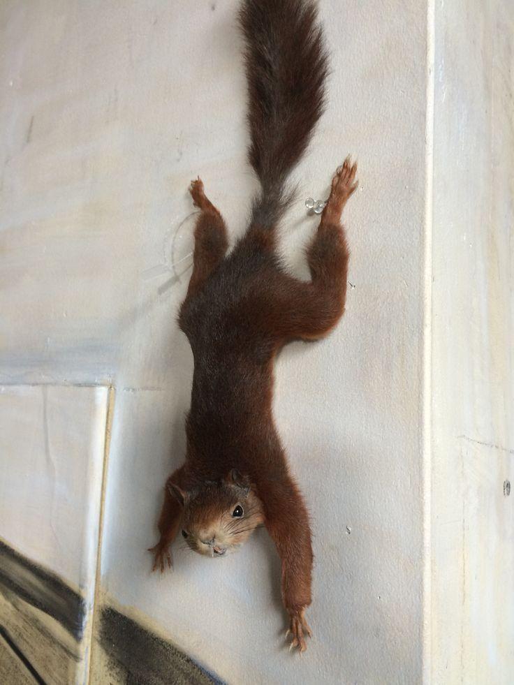 Opgezette eekhoorn - Ella Looise