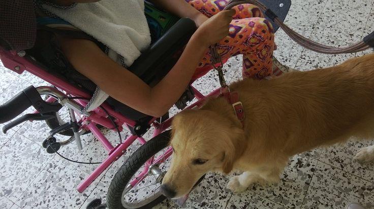 Centro de Actividades y terapias Asistidas con animales
