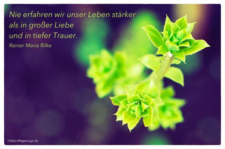 Mein Papa sagt...   Nie erfahren wir unser Leben stärker als in großer Liebe und in tiefer Trauer.  Rainer Maria Rilke    Weisheiten und Zitate TÄGLICH NEU auf www.MeinPapasagt.de