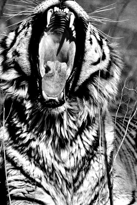 Best Legends Images On Pinterest Building Busy Street And - Powerful and intimate black white animal portraits by luke holas