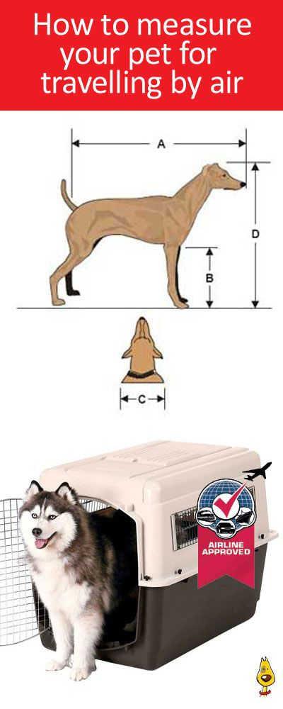 Taking your pet overseas? Check out this simple guide ... http://AnimalInstinct.co.uk/iata-airline-approved-pet-carriers/