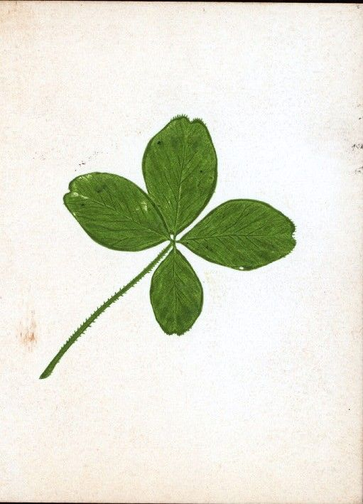 Clovers, Leaf clover and Four leaves on Pinterest