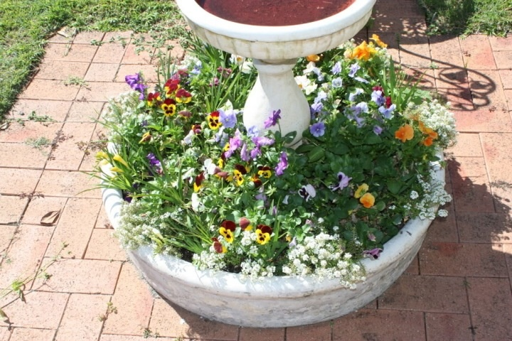 I plant pansies in here every autumn before the freesias come up.