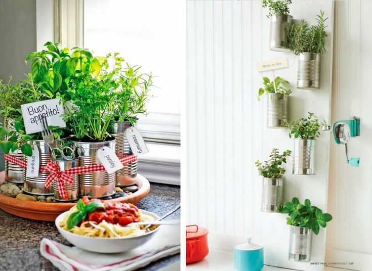 19 migliori immagini organizzare le erbe aromatiche in - Erbe aromatiche in casa ...
