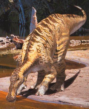 anatotitan.