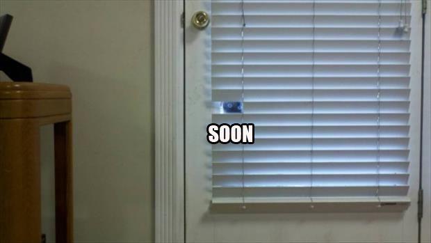 cat soon meme