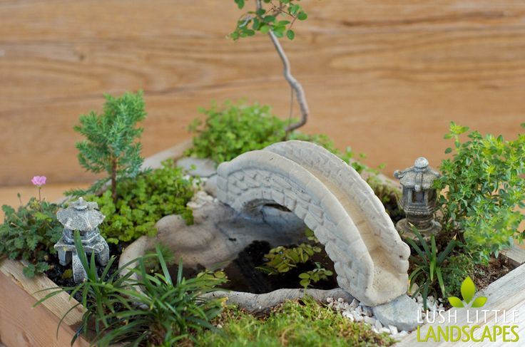 Lush Little Landscapes miniature gardens - gorgeous detail and real plants - learn how to create compositions that look like life-size gardens