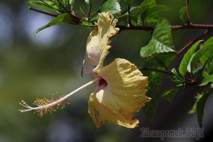 Шри-Ланка. День второй - чайная фабрика и слоновий питомник