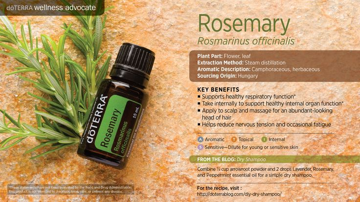 Considered sacred by ancient Greeks, Romans, Egyptians and Hebrews, rosemary has been revered by healers for centuries for its digestive uses and for minor muscle aches and pains.