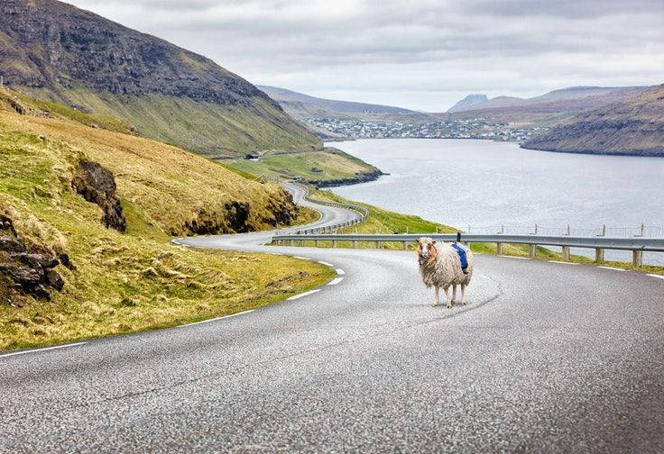 The Faroe Islands are now on Google Street View thanks to…a herd of sheep?