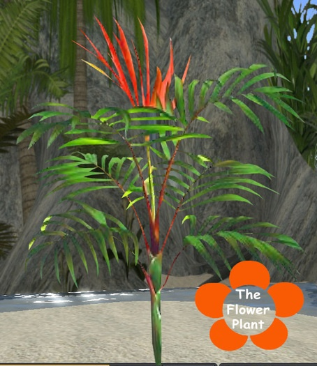 Flame Thrower Palm How Cool Garden Pinterest Palms