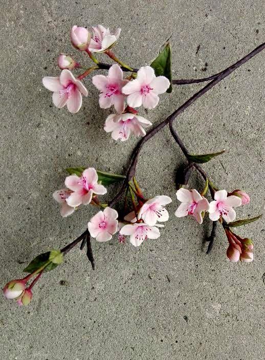 Cherry blossoom