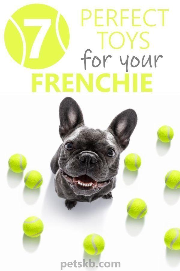 Best Toys For A French Bulldog French Bulldog Puppies French Bulldog Bulldog Puppy Training