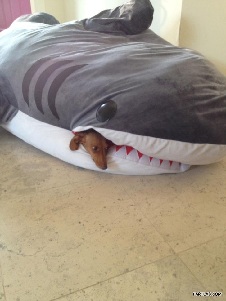 Dog s favorite place to sleep Shark Sleeping Bag