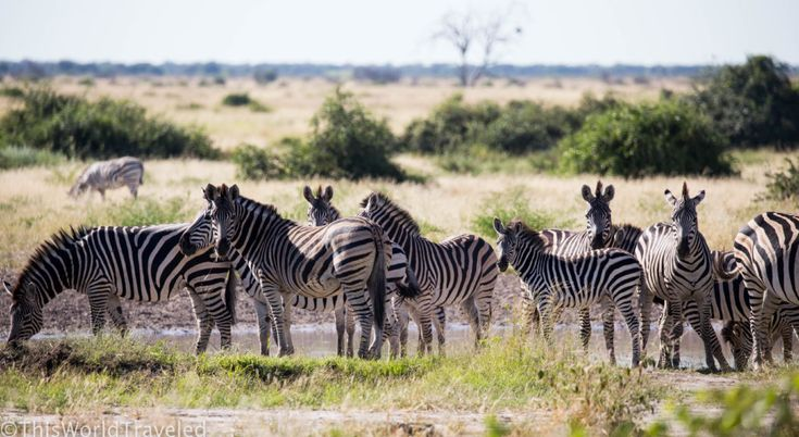 WILD AFRICA: CAMPING WITHOUT FENCES IN BOTSWANA
