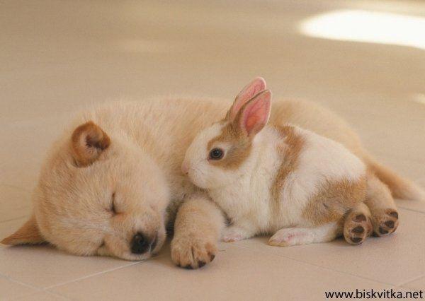 Gastebuch Von Angeleysgaby Hunde Schlafen Tiere Tierbabys