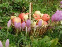Эликсир молодости: Чтобы сохранить мышцы, ешьте хотя бы одно яблоко в...