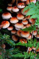 Orange Mushrooms by MiraelFae #mushroom #nature #orange
