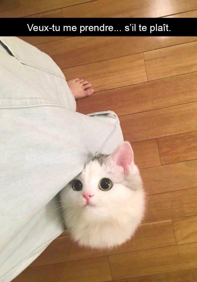 30 photographs de chats avec des légendes hilarantes (nouvelles photos) – ipnoze