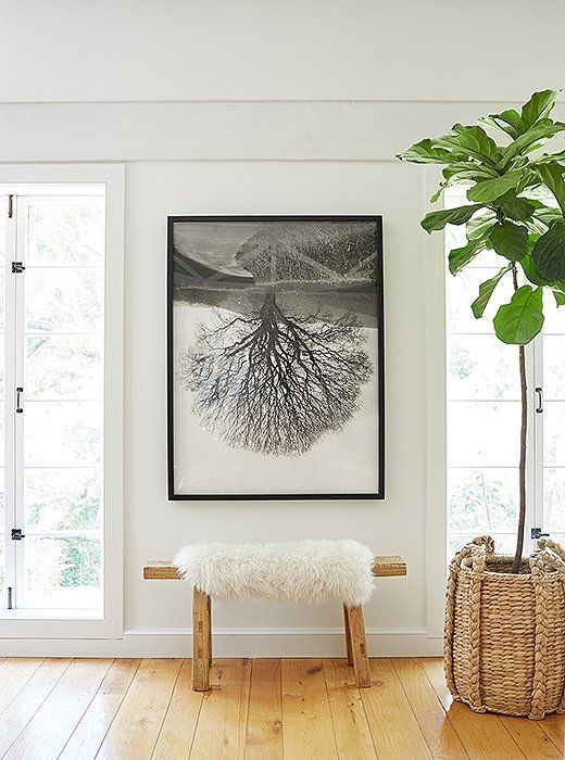Organic-modern living room corner with an oversized piece of black and white art, sheepskin-topped bench and fiddle leaf fig tree in a braided basket.