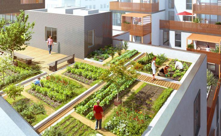 potager sur le toit d 39 un immeuble de logements dino. Black Bedroom Furniture Sets. Home Design Ideas