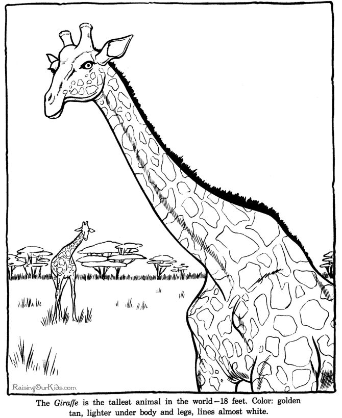 giraffe coloring page sheet zoo animals pages 2 color pinterest zoos coloring pages and. Black Bedroom Furniture Sets. Home Design Ideas