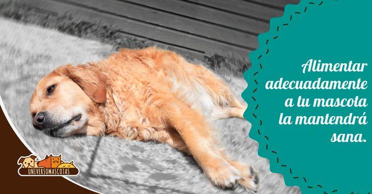 #Dato #UniversoMascotas: La mala nutrición de nuestros perros puede provocar problemas cardiovasculares. http://www.universomascotas.co/bienestar/perros/enfermedades-en-perros-causadas-por-mala-nutricion
