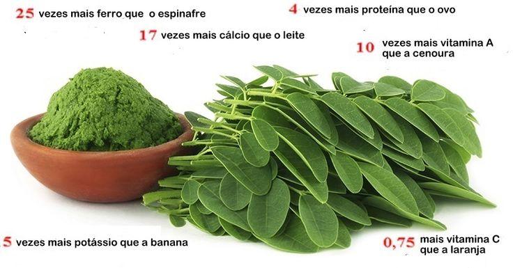 Estudo mostra que esta planta pode curar vários tipos de câncer, incluindo ovário, fígado, pele e pulmão   Cura pela Natureza