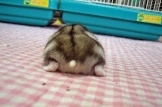 21 Hamster Butt Photos That'll Make You Go Aww (21 Pics) | Daily Dawdle