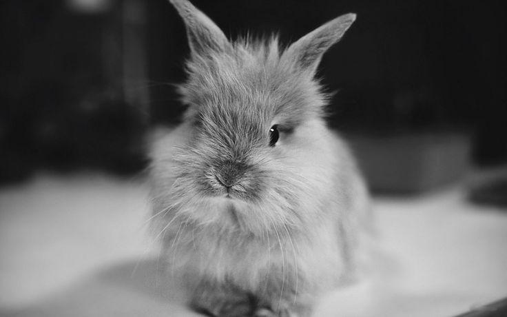 Rabbits HD wallpapers