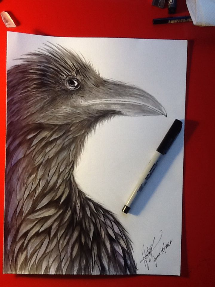 Raven: pencil & ink with colored pencil