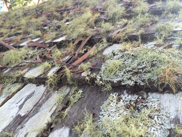 Moss & Lichen covered timber shingle roof- love the natural colours
