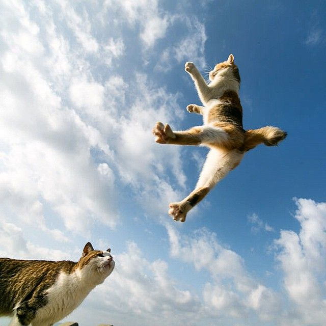 land-like-a-cat:  寒いの寒いの、飛んで行けぇ〜₍˄·͈༝·͈˄*₎◞ ̑̑ (by @tamasa_cota_huu)  Instagram photo | ICONSQUARE (formerly Statigram)