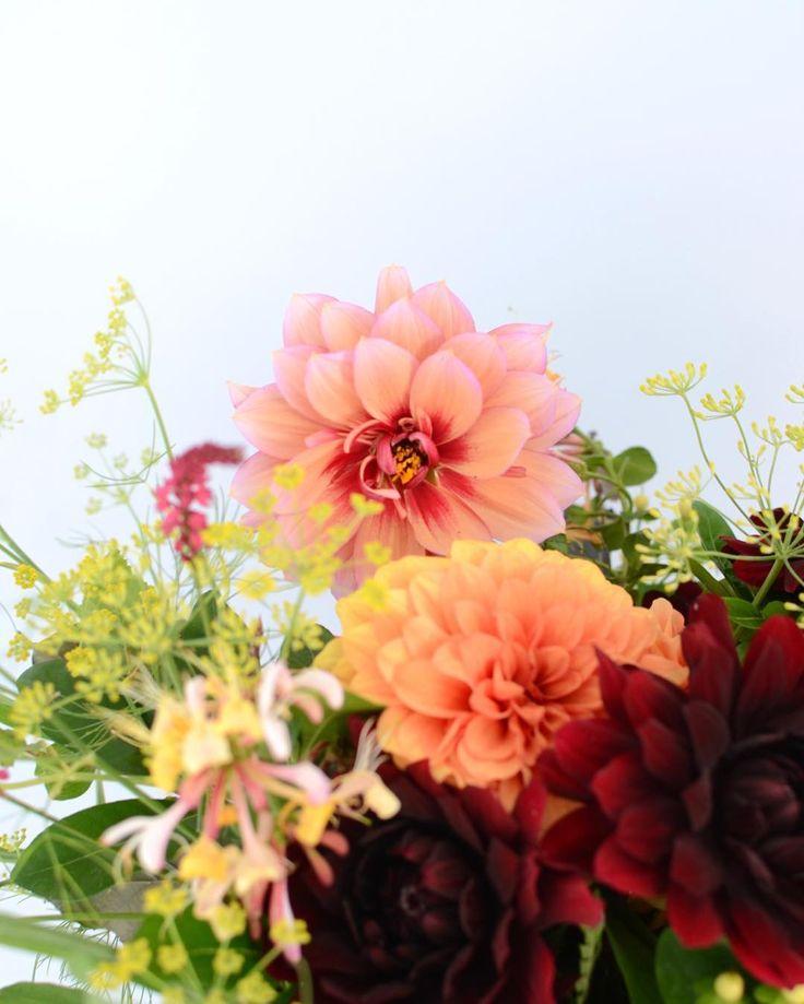 Honeysuckle and dahlia - a heady mix for a gloriously sunny day in Suffolk! Hope the sun is out with you too?! _ _ _ _ #gatherandcurate #gatheringbeauty #underthefloralspell @flowerona #bridebook #weekendstyle #weekendflowers #inspiredbypetals #flowerinspiration #petalsandprops #natureinthehome #stylingtheseasons #embracingtheseasons #cherishandrelish_august #pursuepretty #ccseasonal #dahlia #bridalbouquet #suffolk #flowerschool #weddingflowers