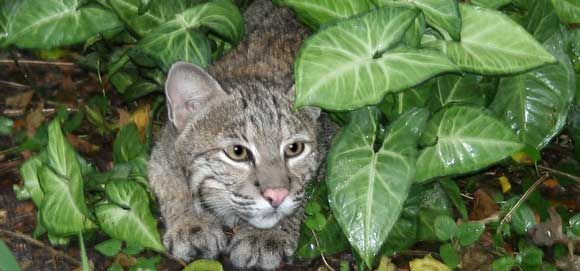 17 best images about plants toxic to cats on pinterest