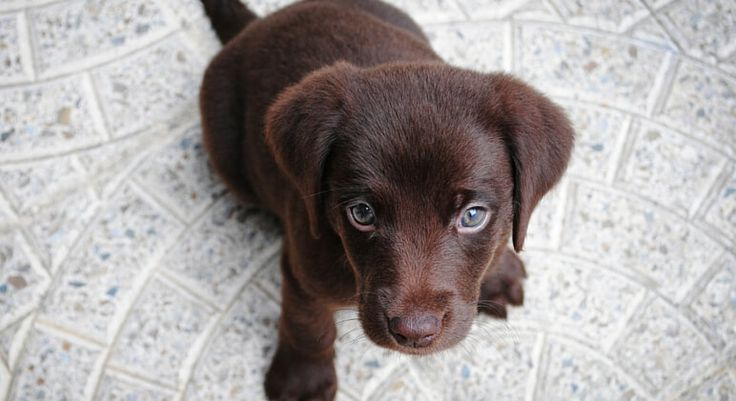 Along with spoiling your new pup, it's always a good idea to start teaching commands early. See the 4 essential commands to teach your puppy.