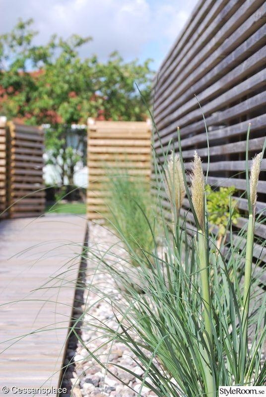 trädgård,prydnadsgräs,pampagräs,trädgårdsgång