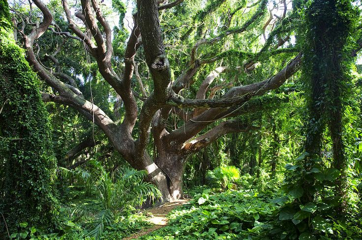 17 Best Images About Shrubs And Trees On Pinterest Trees