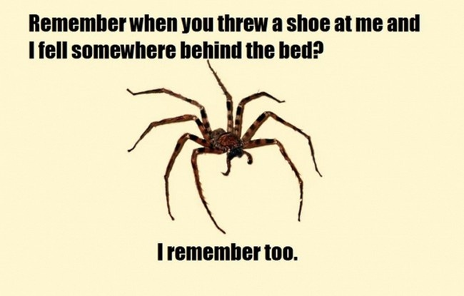 #funny joke lol meme memes caption comic spider scary