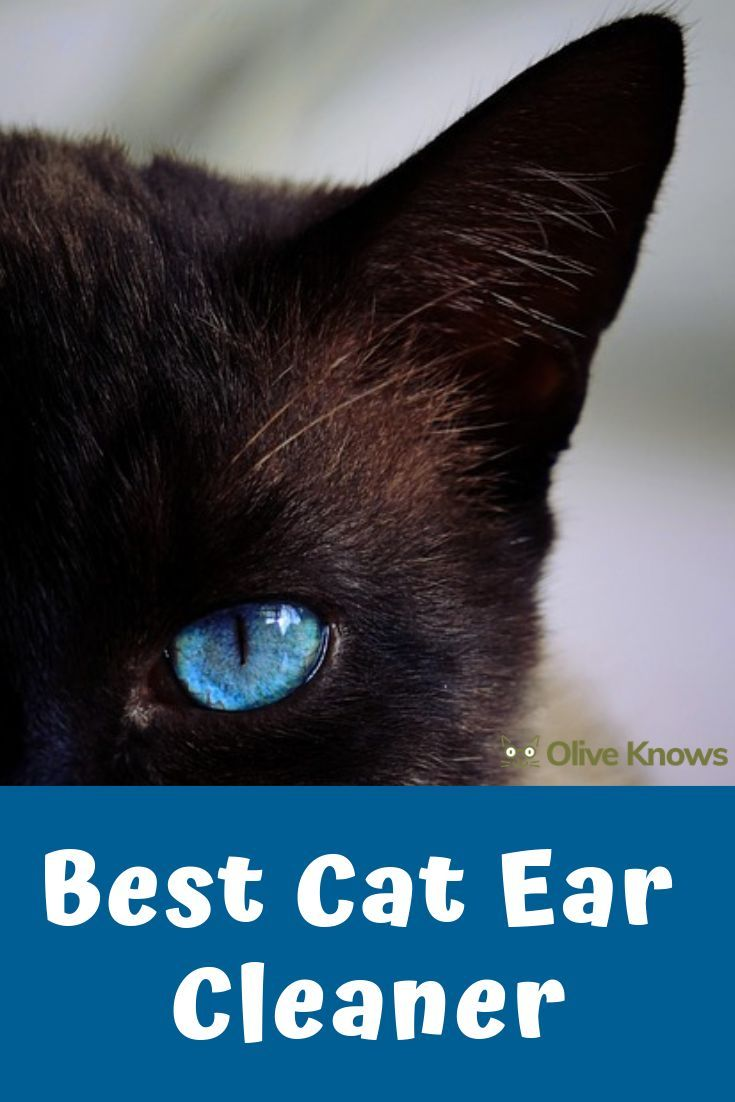 Best Cat Ear Cleaner Updated For 2020 Oliveknows Cat Care Cool Cats Ear Cleaning
