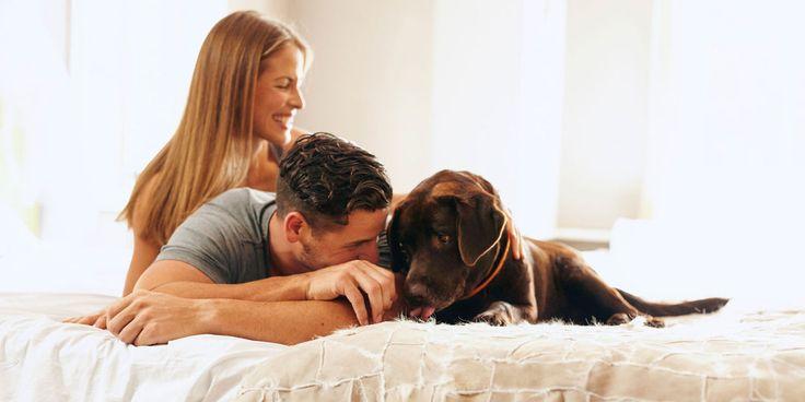 ВЫЯСНИЛОСЬ, КАК СОБАКИ В СПАЛЬНЕ ВЛИЯЮТ НА СОН  Американские ученые из клиники Мэйо выяснили, что присутствие домашних питомцев в спальне может улучшить качество сна людей – однако здесь есть и нюансы.  В течение пяти месяцев ученые изучали, как спят 40 здоровых взрослых, не страдающих нарушениями сна, и их собаки. Участники исследования и их собаки носили трекеры активности, которые позволяли отслеживать их состояние в течение семи ночей.  Согласно исследованию, присутствие собак помогает…