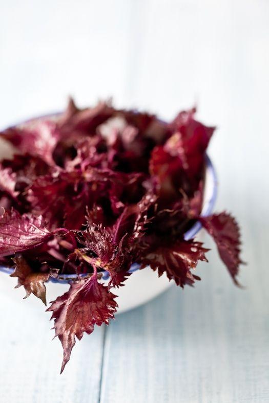 Purple shiso (aka Japanese basil)...a fabulously versatile herb