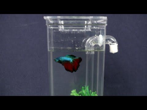 1000 images about aquaponics self cleaning aquarium on for How often do you clean a fish tank