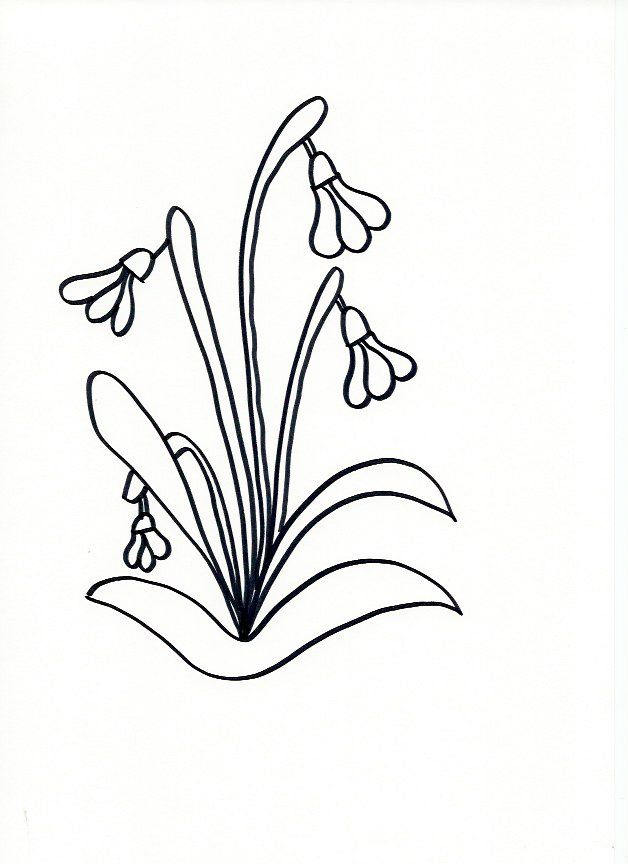 Line Drawing Flowers 15 : Best images about drawing on pinterest