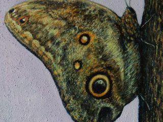 Farfalla 2, Olio e Terra su Cartone Telato, 45×35
